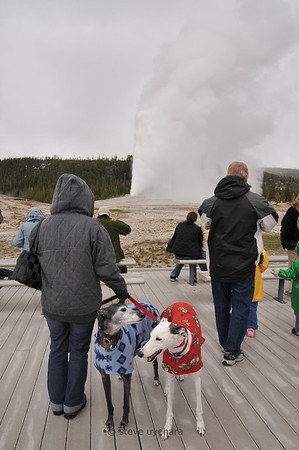 Rachel watches Old Faithful; Sadie and Katie do not